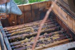 镇定的蜂蜜蜂 免版税库存图片