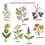 镇痛的最佳的镇痛药自然草本 向量例证