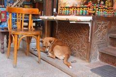 镇静地坐在商店前面的狗 免版税图库摄影