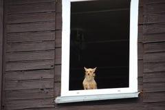 镇静地看通过老木房子窗口的一条小棕色狗  免版税库存照片