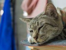 镇静地睡觉的虎斑猫 免版税图库摄影