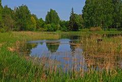镇静池塘在有绿色树和高草的地方公园 免版税库存图片