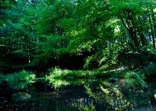 镇静河在绿色森林里 免版税库存照片