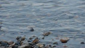 镇静河水表面晚夏 影视素材