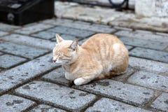 镇静猫 免版税图库摄影