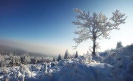 镇静雪冬天 库存照片