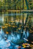 镇静,安静的心情在秋天公园 Forest湖,五颜六色的秋天长的曝光 在水表面的叶子 免版税图库摄影