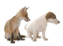 镍耐热铜崽和狗 免版税库存图片