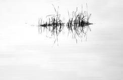水镜子和芦苇 库存图片