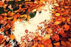 镜子在水中 在叶子的框架 下落的山毛榉leves和石头在山河中水,第一片叶子吼叫水平面 免版税库存照片