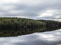 镜子森林 库存照片
