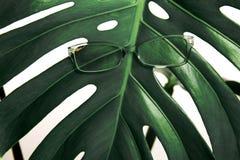 镜片绿色热带叶子白色背景时装配件概念眼科医生光学新鲜的刃角 免版税图库摄影