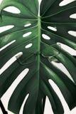 镜片绿色热带叶子白色背景时装配件概念眼科医生光学新鲜的刃角 免版税库存图片
