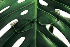 镜片绿色热带叶子白色背景时装配件概念眼科医生光学新鲜的刃角 免版税库存照片