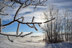镶有钻石的旭日形首饰的冷淡的树 免版税库存照片