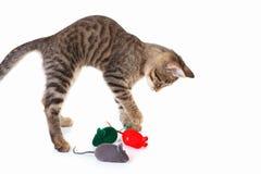 镶边小猫演奏与在白色背景的一只红色,灰色和绿色玩具老鼠 图库摄影