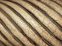 镶边有裂痕的木头 库存图片