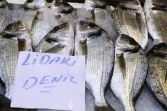 镶边海鲷Lithognathus mormyrus鱼市 库存照片