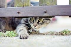 镶边猫使用 图库摄影