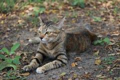 镶边猫在庭院里 猫是与软的毛皮的一只小被驯化的肉食哺乳动物 图库摄影