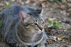 镶边猫在庭院里 猫是与软的毛皮的一只小被驯化的肉食哺乳动物 库存照片