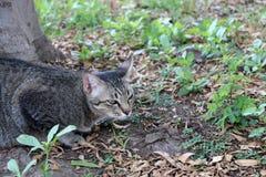 镶边猫在庭院里 猫是与软的毛皮的一只小被驯化的肉食哺乳动物 免版税库存图片