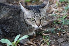 镶边猫在庭院里 猫是与软的毛皮的一只小被驯化的肉食哺乳动物 库存图片