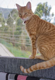 镶边猫在窗口里 图库摄影