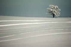镶边的冬天 库存图片