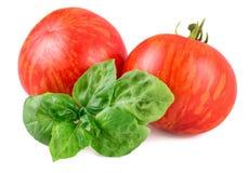 镶边的蕃茄, Tigerella培育品种 库存照片