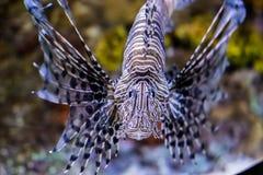 镶边的鱼 免版税库存照片