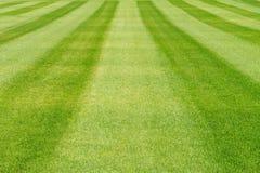 镶边绿草草坪背景 免版税库存图片