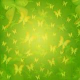 镶边蝴蝶在绿色老纸背景中 库存图片