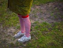 镶边长袜的妇女在草背景 库存照片