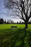 长凳下庇荫树 免版税库存照片