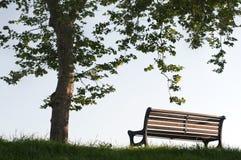 长凳下rhe结构树 免版税库存图片