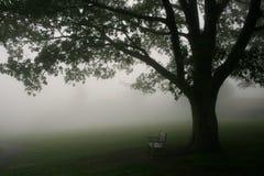 长凳公园结构树 库存照片