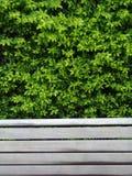 长凳叶子 免版税图库摄影
