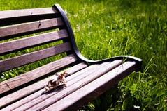长凳叶子 库存图片