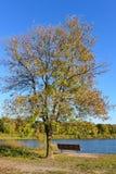 长凳和树在湖Cenaiko岸  库存图片