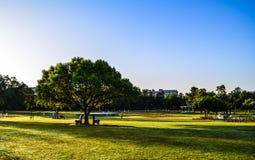 长凳和树 免版税库存照片