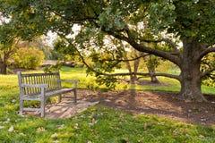 长凳和橡树在城市公园在秋天 免版税库存图片