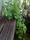 长凳和灌木 免版税图库摄影