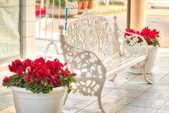 长凳和红色仙客来 免版税库存照片