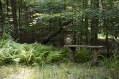 长凳和蕨在足迹旁边 库存图片