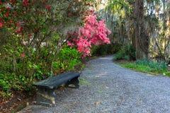 长凳和路通过杜娟花庭院 免版税图库摄影