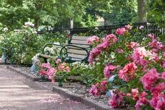 长凳和道路在梅里克玫瑰园 库存照片