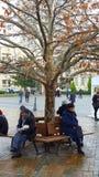长凳和结构树 库存图片