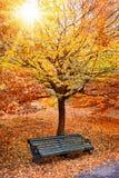 长凳在一棵树下在公园 免版税库存图片