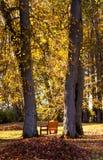 长凳在公园,秋天 库存照片
